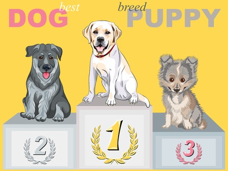 vector smiling puppy dog champion of different breeds on the podium Stock Vector - 18012108