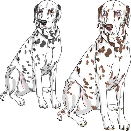 dalmatier: Schets van de vrolijke serieuze hond Dalmatische ras twee verschillende kleuren, een - met zwarte vlekken en bruine ogen, de tweede - met bruine vlekken en blauwe ogen Stock Illustratie