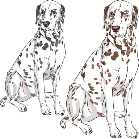 Sketch of the cheerful serious dog Dalmatian breed two different color, one - with black spots and brown eyes, the second - with brown spots and blue eyes Vector