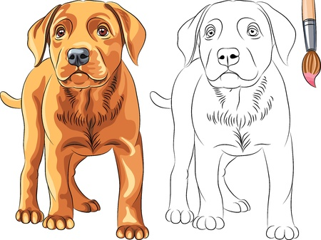 Coloring Book for Children of funny serious Puppy dog Labrador Retriever breed Vector