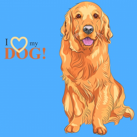 guide dog: Vector smiling red gun dog breed Golden Retriever sitting on the blue background Illustration