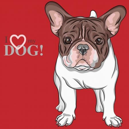 Vector closeup portrait of the domestic dog French Bulldog breed  Illustration