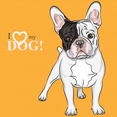 国内犬のフランス語ブルドッグ品種のベクトルのクローズ アップの肖像 ベクターイラストレーション