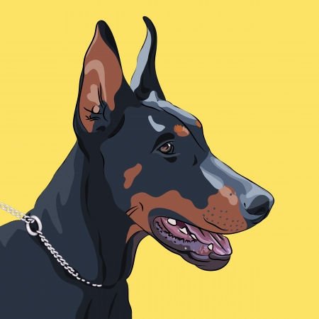 Close-up portrait of serious dog Doberman Pinscher breed