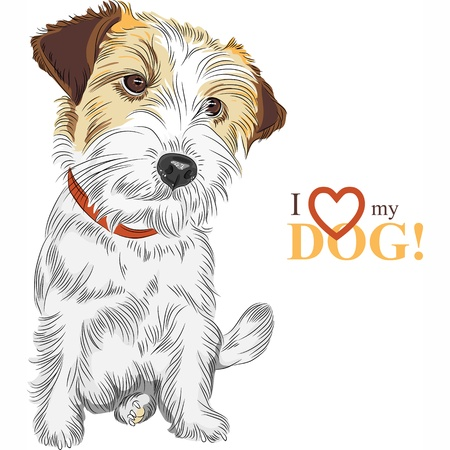 short haired: Vector color sketch of the wire-haired dog Jack Russell Terrier breed