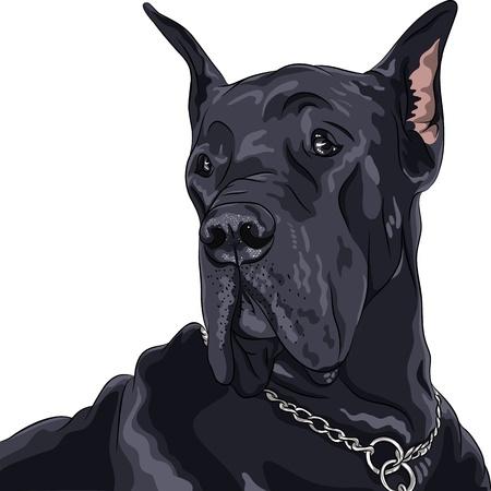borzoi: Vector sketch of close up portrait black dog Great Dane breed