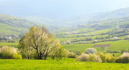 Spring evening landscape  green flowering slopes of the Carpathian Mountains photo