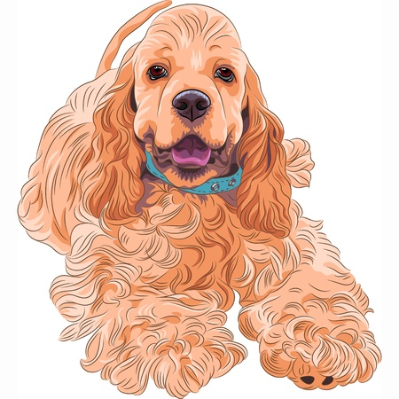 close-up portrait of a  cute sporting  dog breed American Cocker Spaniel smiling Illustration