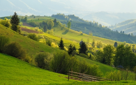 Spring gold evening rural landscape in the Mizhhiria, Carpathian mountains