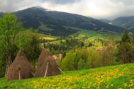 carpathian mountains: Spring morning rural landscape with two haystacks in the Carpathian mountains.