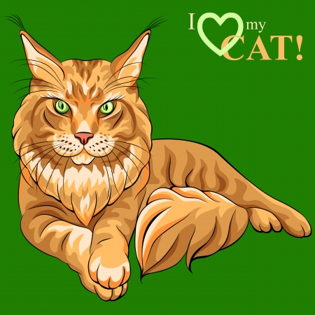 Vector color sketch serious red fluffy Maine Coon  American Longhair  cat lying Vector