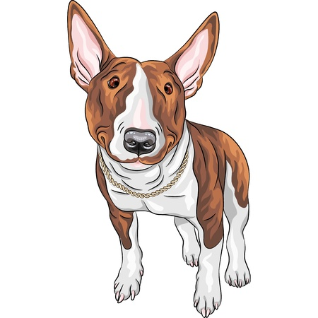 Vector color sketch of cheerful smiling Excellent Bull Terrier Dog in black and tan isolated on the white background Vector