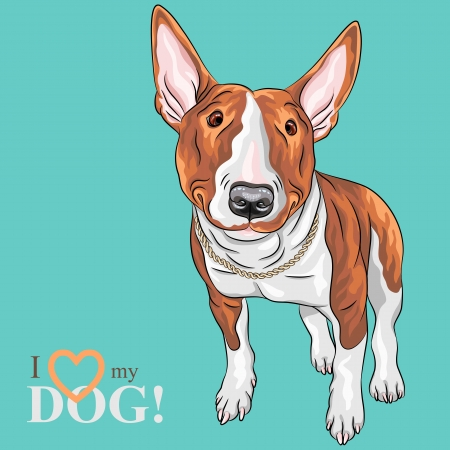bullterrier: Vector color sketch of cheerful smiling Excellent Bull Terrier Dog in black and tan isolated on the white background