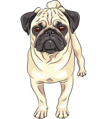 color sketch cute serious dog fawn pug breed  Vector