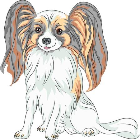 ベクター カラー スケッチ毛むくじゃらの長い耳を持つパピヨン赤と黒犬