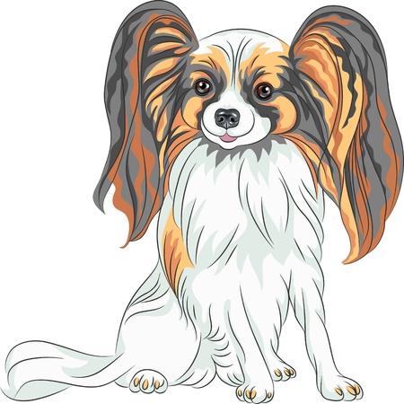 ベクター カラー スケッチ毛むくじゃらの長い耳を持つパピヨン赤と黒犬 写真素材 - 21080360