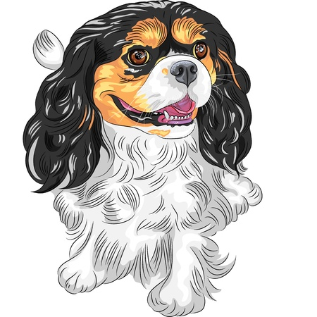Vector cute smiling dog Cavalier King Charles Spaniel breed  Vector