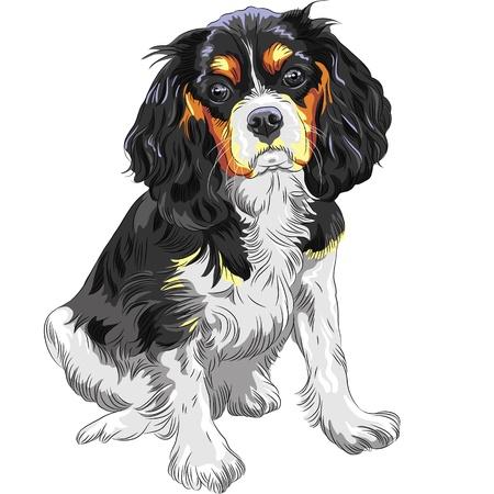 Cute sad dog Cavalier King Charles Spaniel breed  Illustration