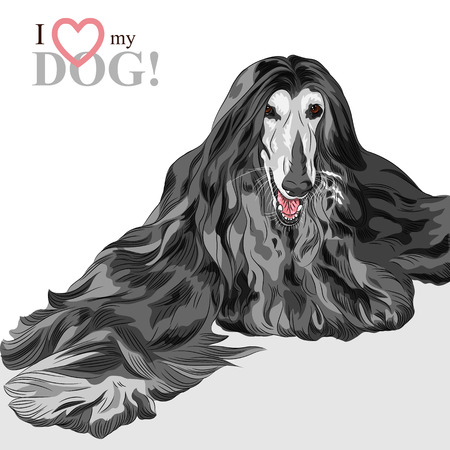 sentarse: dibujo del perro negro raza Afghan Hound Vectores