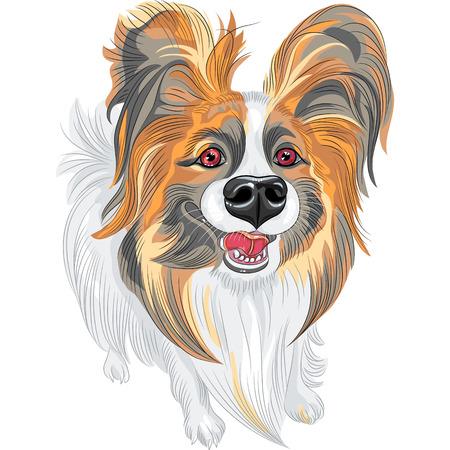 耳の長い毛むくじゃらのかわいい笑顔パピヨン赤と黒犬