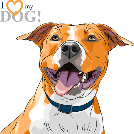 terriers: closeup portrait of the smiling dog American Staffordshire Terrier breed Illustration