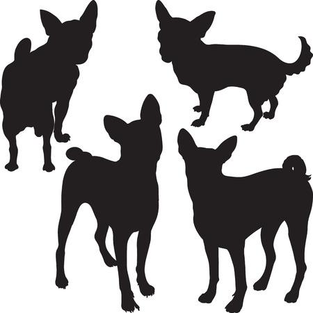 cane chihuahua: insieme di sagome di cani Chihuahua, razza Basenji nel rack