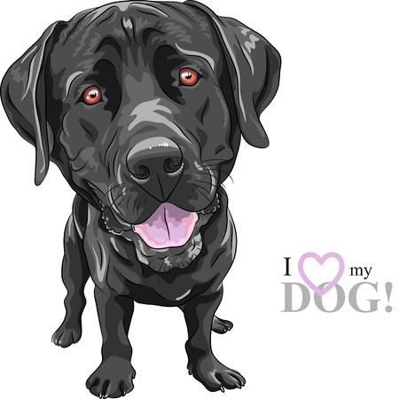 portrait of a close-up of smiling black dog breed Labrador Retriever Illustration