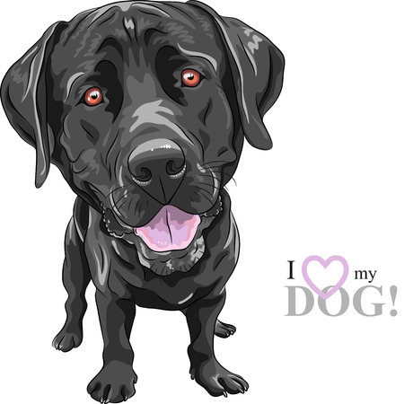 cartoon: portrait of a close-up of smiling black dog breed Labrador Retriever Illustration