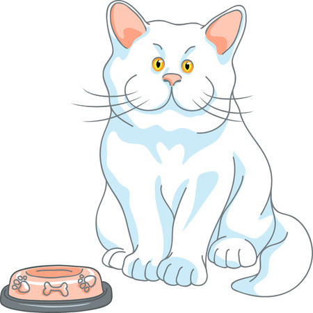 empty bowl: hungry cute white cat with yellow eyes and empty bowl, isolated on the white background