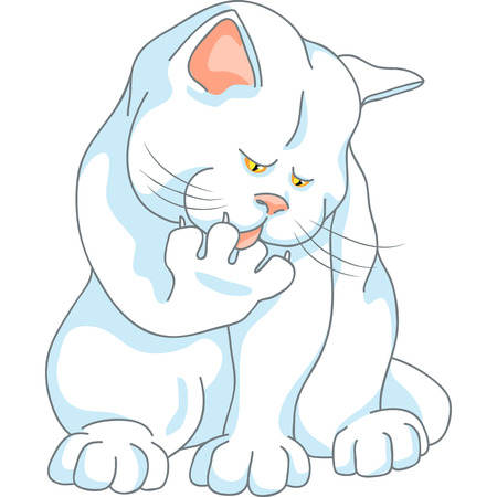 cute white cat with yellow eyes washes, licking his paw, isolated on the white background Vector