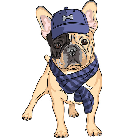Vektor-Hipster Hund Französisch Bulldog Rasse in einer blauen Mütze und Schal