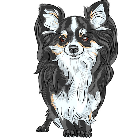 vector color sketch of the cute dog Chihuahua breed smiling Vector