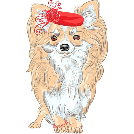 vector color fashion cute dog Chihuahua in the red hat and bracelet Vector
