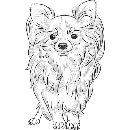 cartoon chihuahua: vector grayscale sketch of the cute dog Chihuahua breed smiling
