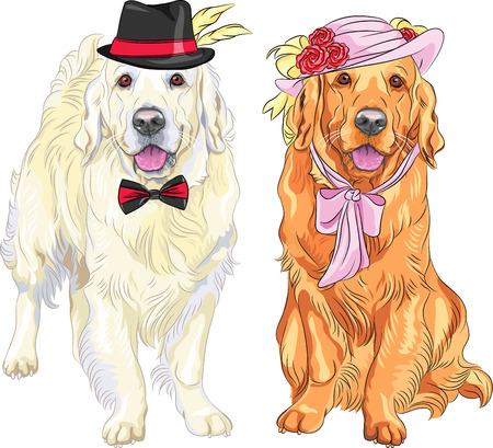 woman tie: vector hipster pair of dogs  white labrador gentleman in a hat and bow tie and red labrador lady in a hat with flowers and ribbons and bow at the neck