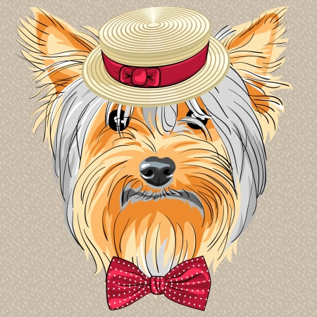 vector hipster dog Yorkshire Terrier breed in a Straw boater and bow tie