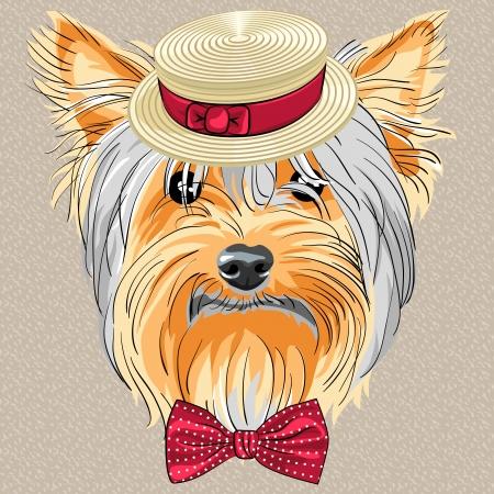 bow tie: raza vector inconformista perro Yorkshire Terrier en un sombrero de paja y pajarita