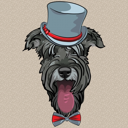 funny bearded man: vector hipster dog Schnauzer breed in a gray hat and bow tie Illustration