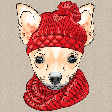 dog: 니트 모자와 스카프 만화 소식통 귀여운 강아지 치와와 품종의 벡터 색 스케치