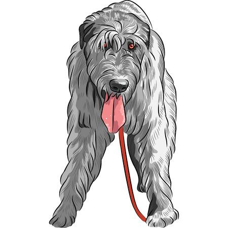 pawl: vettore arrabbiato grande caccia cane di razza Irish Wolfhound