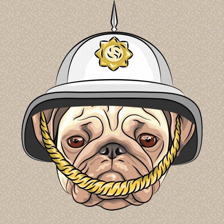 breeds: serious dog breed pug in the British helmet