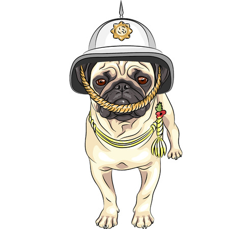 british army: serious dog breed pug in the British helmet
