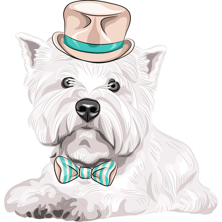 Vector color sketch closeup portrait serious dog West Highland White Terrier breed  in a beige silk hat and bow tie Illustration