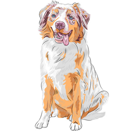 aussie: Vector dog Red Australian Shepherd breed  Aussie or little blue dog  Illustration