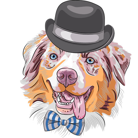 Vector funny hipster dog Red Australian Shepherd breed  Aussie or little blue dog   in a black hat and bow tie Illustration