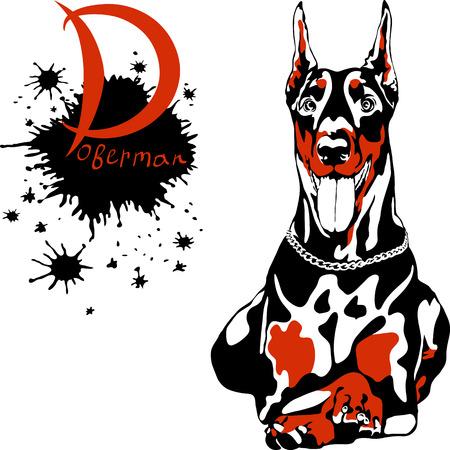 pinscher: Vector dog Doberman Pinscher breed lying and smilling