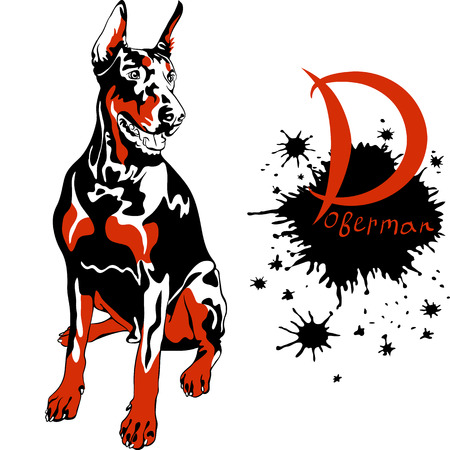 pawl: Vector dog Doberman Pinscher breed sitting Illustration