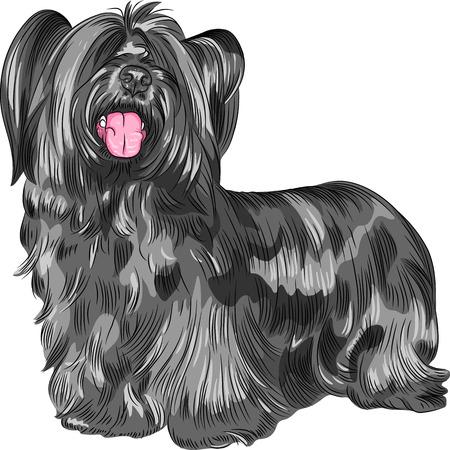 lengua larga: Raza vectorial Funny peludo perro sonriente Skye Terrier