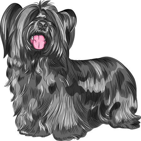 pawl: Vector Funny shaggy smiling dog Skye Terrier  breed Illustration