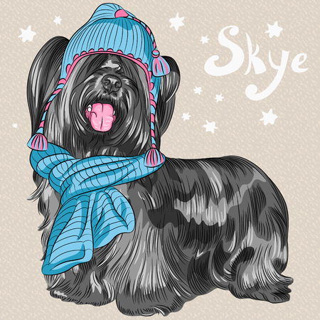 shaggy dog: Vector color sketch of the cartoon hipster cute dog Skye Terrier breed in knitted hat and scarf